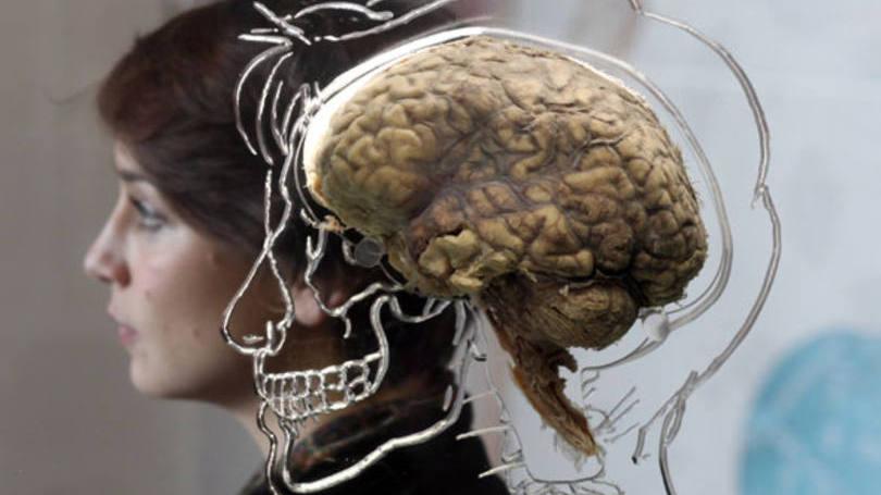 Rosto e cérebro